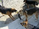Örökbefogadói nyílt nap  a Pomázi Állatvédőknél