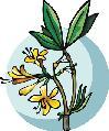 Mérgező növények a kertben és a lakásban