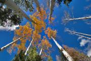 Mit ad nekünk az ősz?