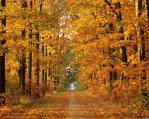 Ősz és a természet
