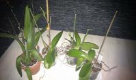 Orchidea gondozása, személyes tapasztalat