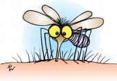 Érdekes megoldás szúnyogok ellen