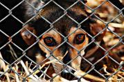 Zsákbakutya - avagy menhelyi kutya nevelése