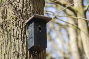 Mit tehetünk a madarakért?