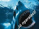 Mókica képeslapja