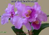 saro44 képeslapja