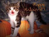 Halloweenes képeslap