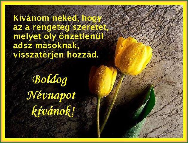 http://static.hoxa.hu/pic/kepeslapok/68001-69000/68790.jpg