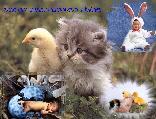 ZITA9770 képeslapja