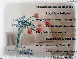 TyBoR képeslapja