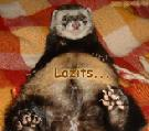 Egyéb állatos képeslap