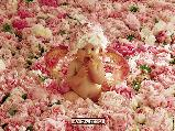 Virágos képeslap